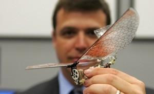 Будущее авиации — боевые насекомые