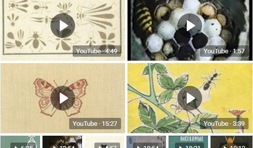 Советские обучающие фильмы о насекомых